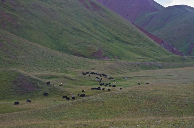 Kirgistan (4)