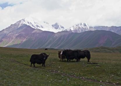 Kirgistan (9)