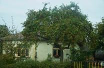 überall Apfelbäume