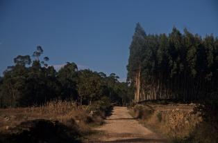 Camino (23)