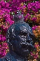 Pinke Taubenbrust